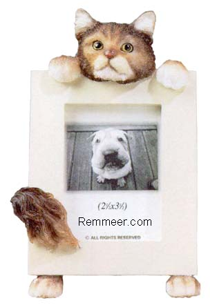 Maine Coon Cat Frame