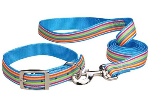 Puppy Collar Leash Set