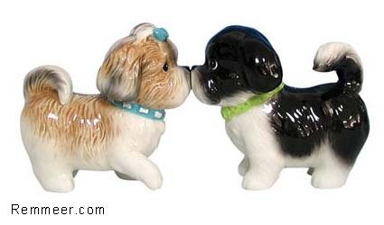Shih Tzu S&P Shakers